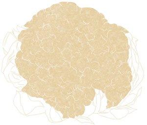 Illustration of SPH-Dell-Nourish-Garden-Cauliflower