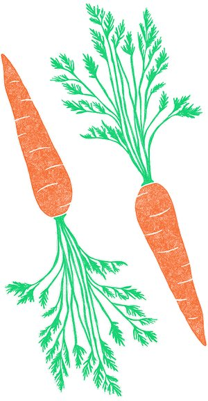 Illustration of SPH - Dell - Nourish - Garden - Carrots