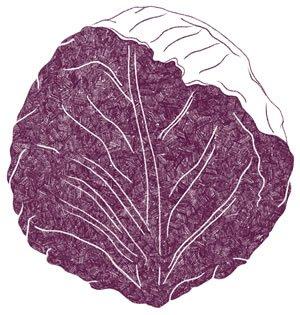 Illustration of SPH-Dell-Nourish-Garden-Cabbage